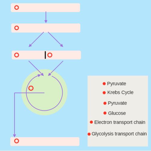 Cellular Respiration | CK-12 Foundation