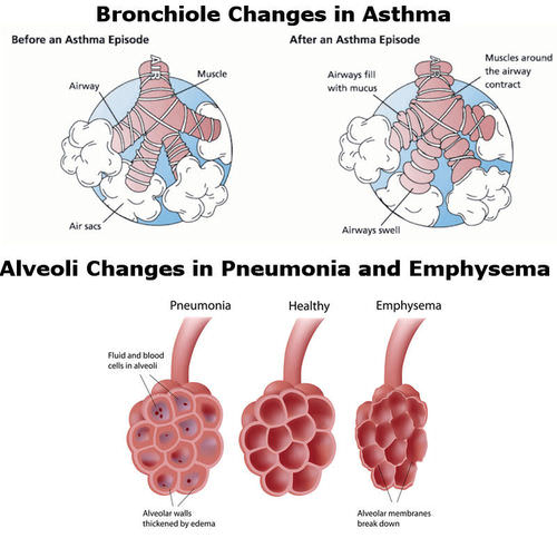 how does asthma affect cellular respiration