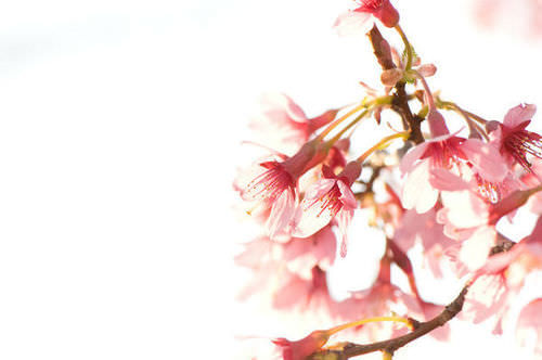 overexposed, blown out photo of blossoms