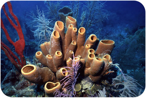 Sea sponges often have tube-like bodies with many tiny pores