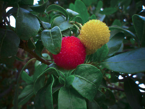 Fruits of Flowering Plants - Advanced