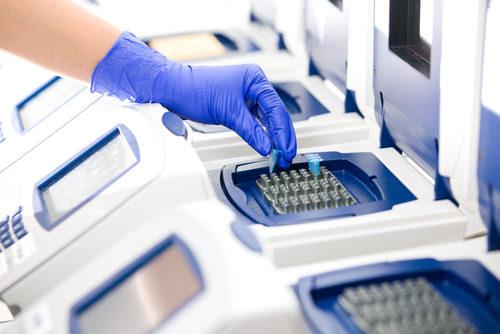 PCR ( Read ) | Biology | CK-12 Foundation