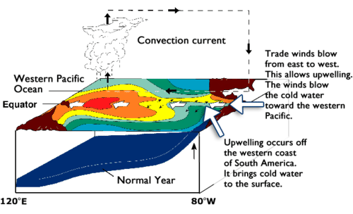 Diagram of the Pacific Ocean in a normal year