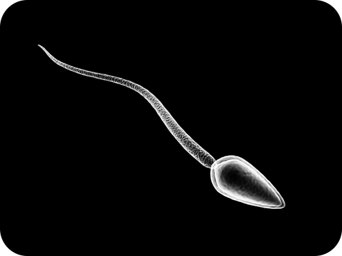 Sperm ( Read )   Biology   CK-12 Foundation