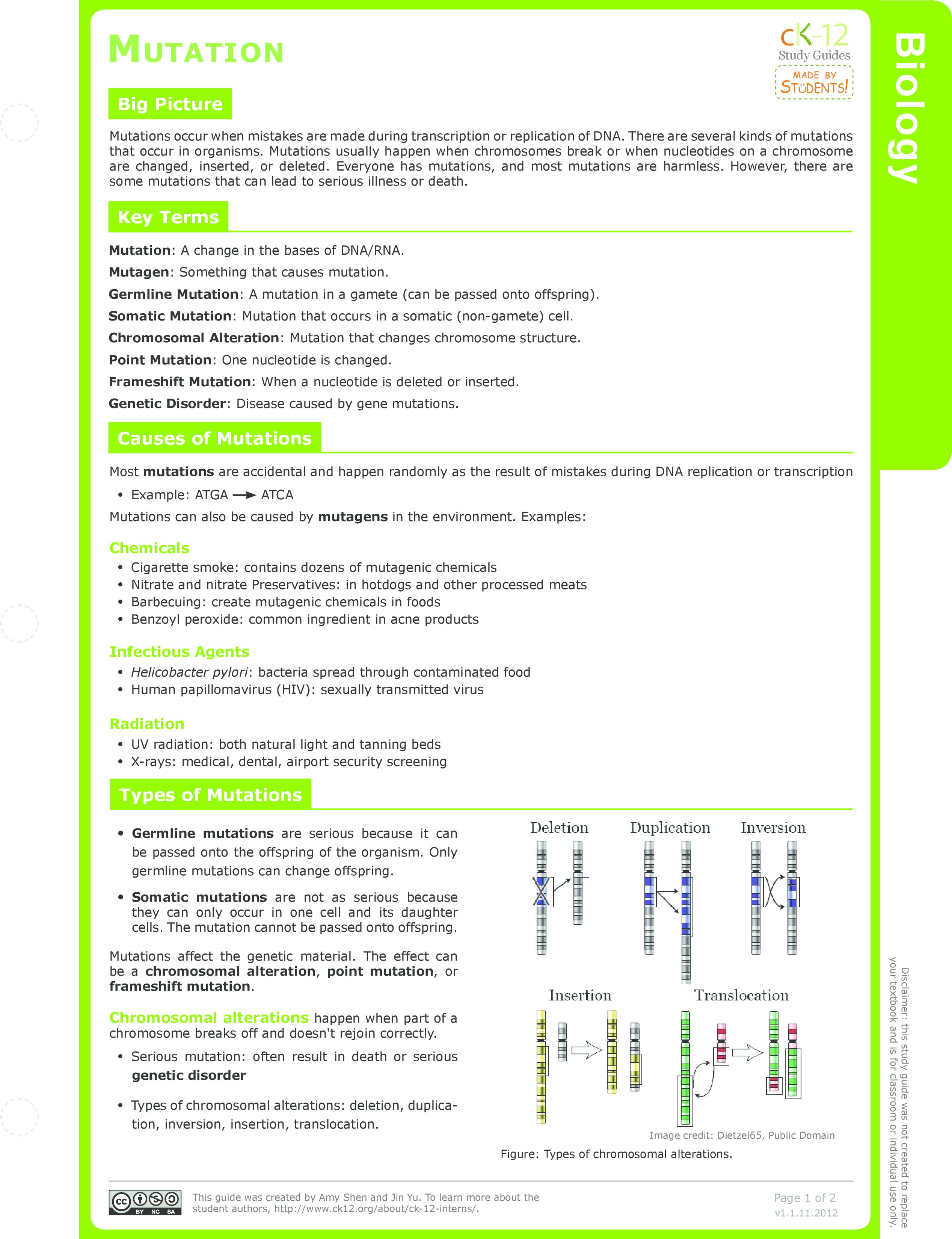 worksheet Chromosomal Mutations Worksheet mutation ck 12 foundation study guide