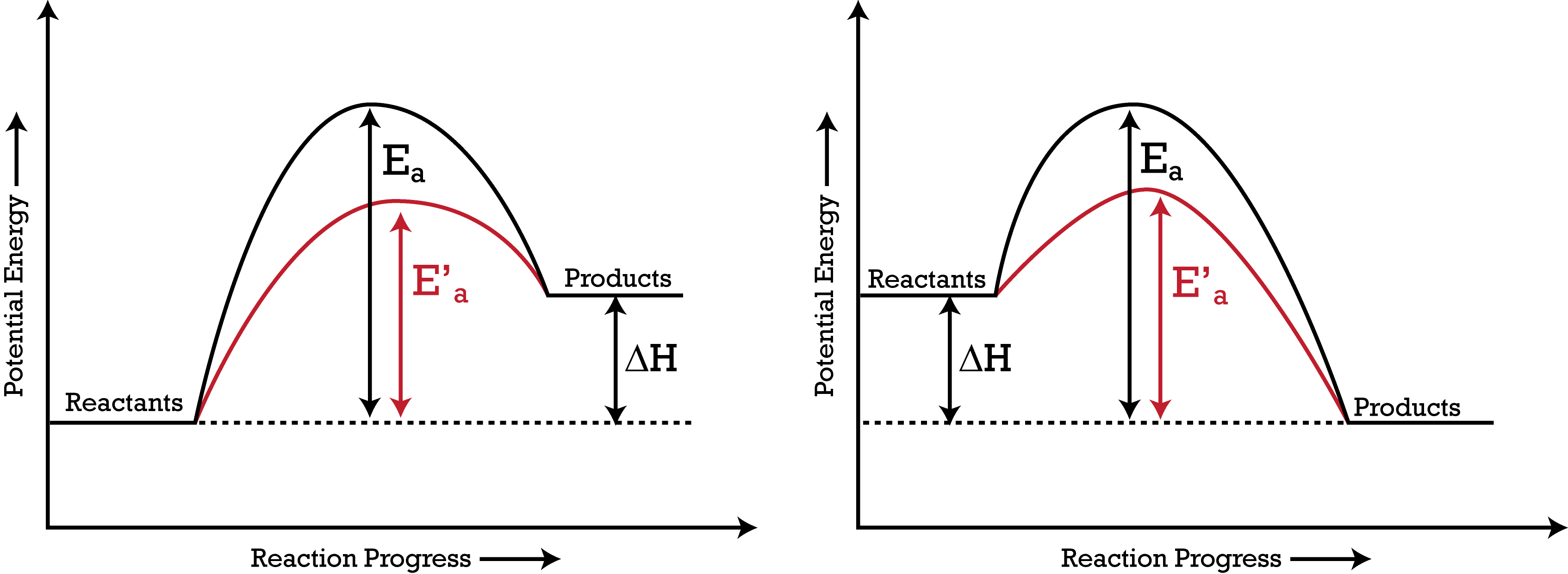 The addition of a catalyst lowers activation energy, which increases the rate of a reaction