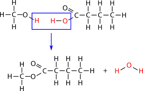 Structure of an esterification reaction