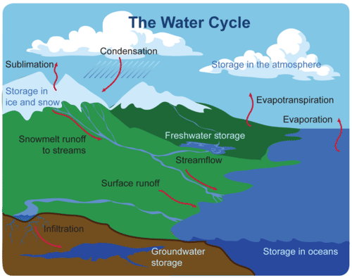 The water cycle takes place on, above, and below Earth's surface