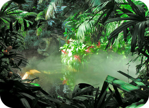 Picture of a modern rainforest, similar to those during the Carboniferous