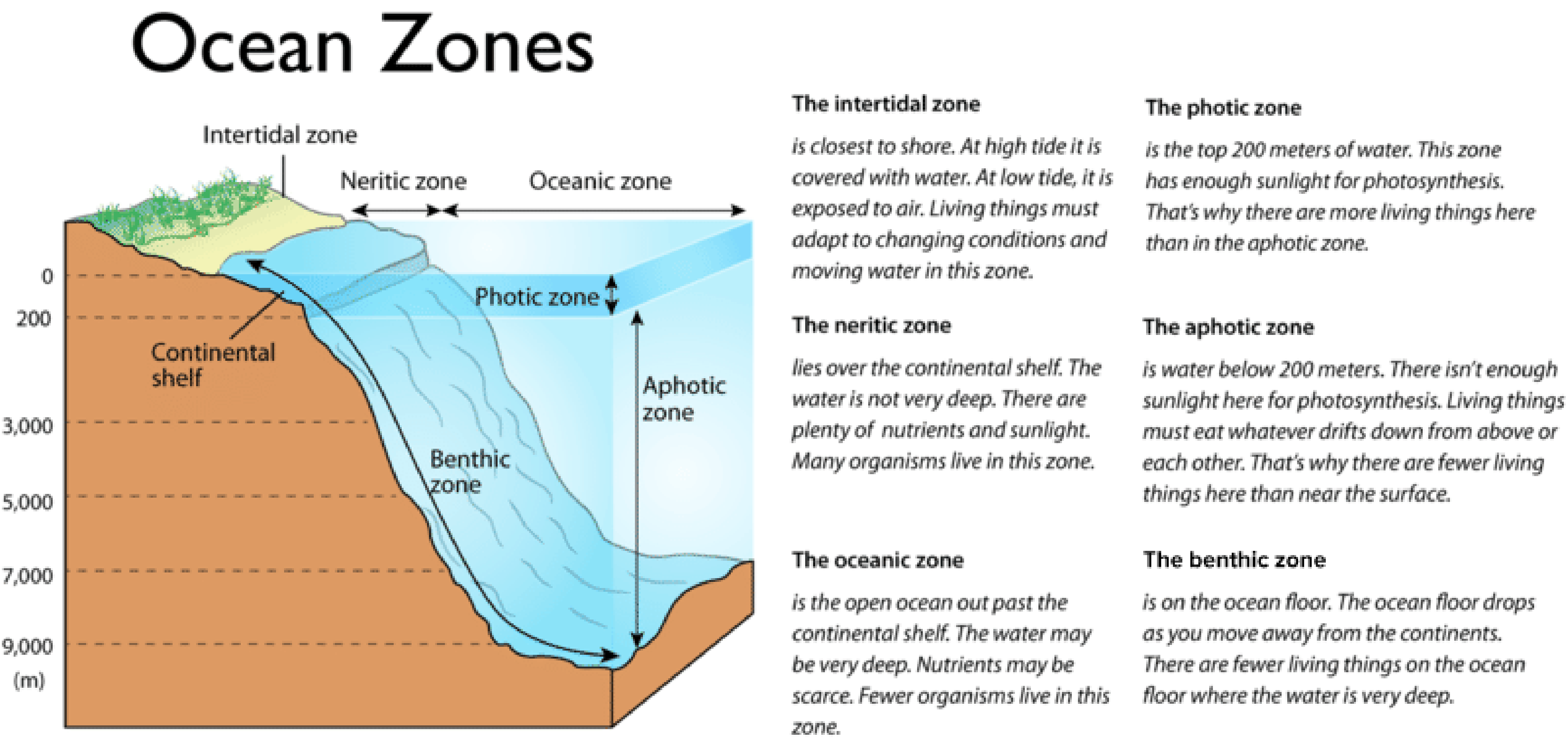 Diagram of the vertical and horizontal ocean zones