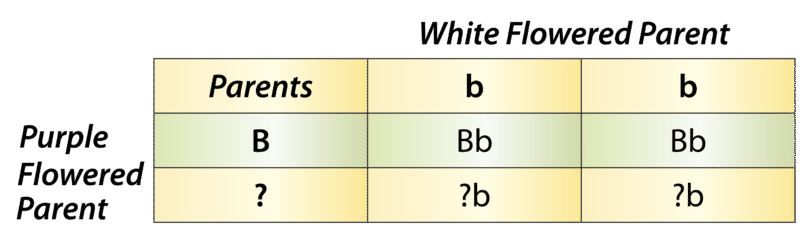 Test cross with a Punnett square