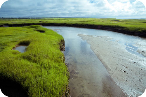 A salt marsh on Cape Cod in Massachusetts