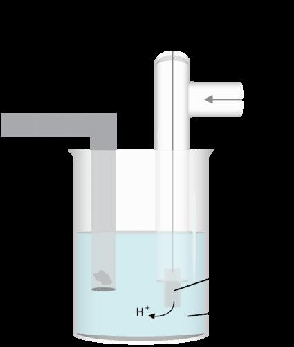 Standard hydrogen half-electrode