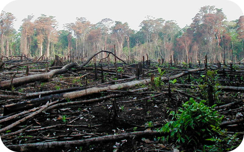 A forest that has been slash-and-burned to make new farmland