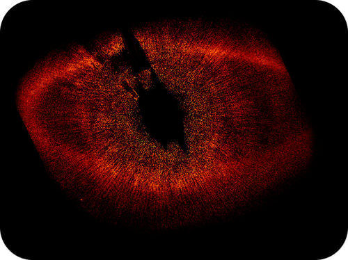 The extrasolar planet Fomalhaut is surrounded by a large disk of gas