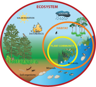 Diagram of abiotic factors of an ecosystem