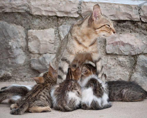 Like all living things, cats reproduce to make a new generation of cats