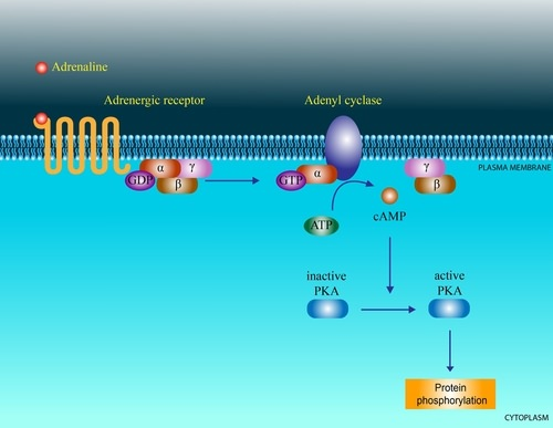 Signal Transduction - Advanced