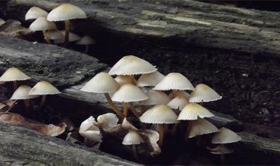 Planet Wild - Fungi
