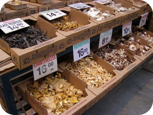 Edible types of mushrooms