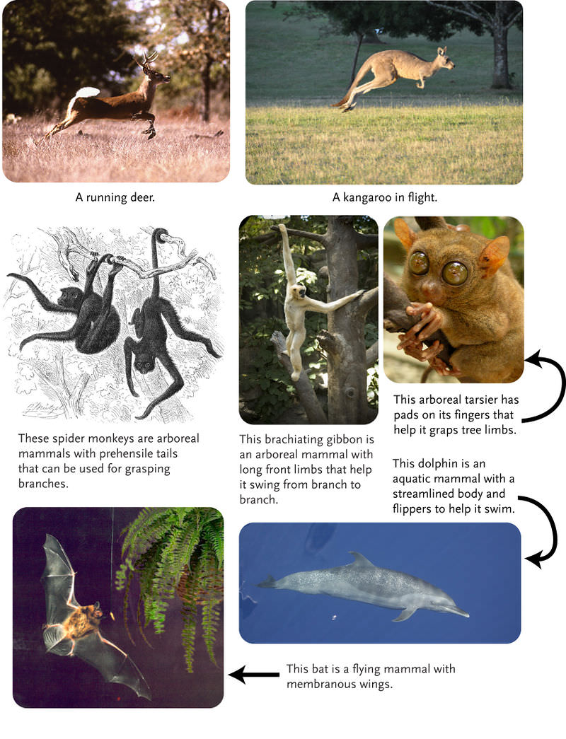 Mammalian Traits | CK-...