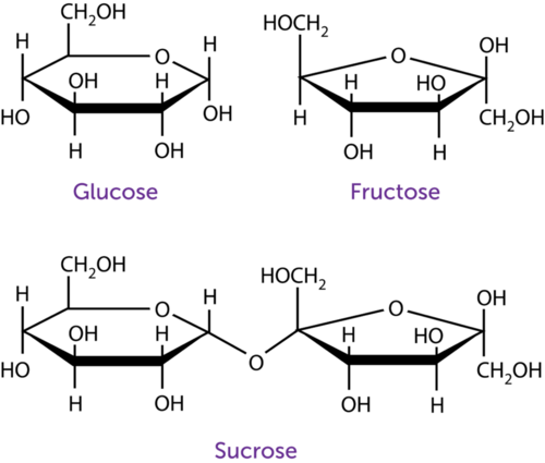 Structural formulas for glucose, fructose, and sucrose