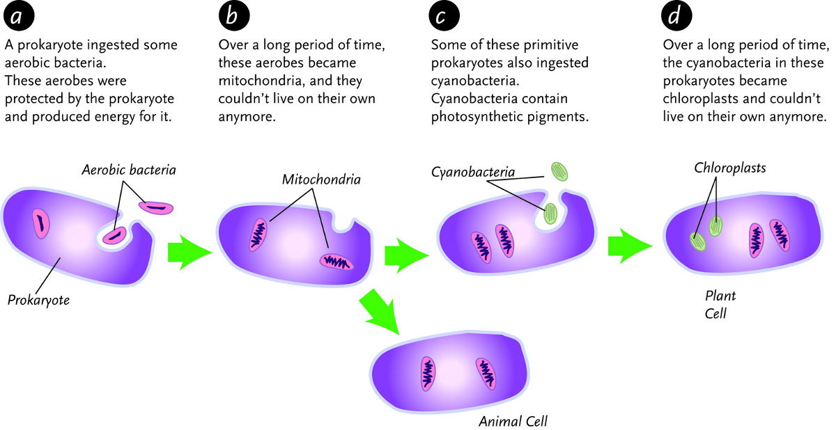 Introduction to Protists : CK-12 Foundation