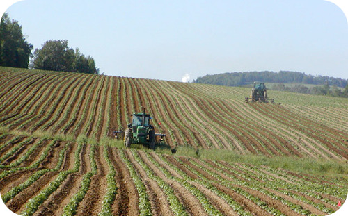 Tractors farming a single crop