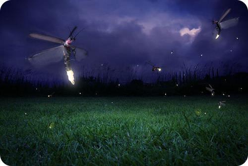 Bioluminescent fireflies