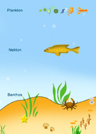 Plankton, nekton, and benthos are the three groups of living things in the oceans