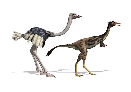 Bird Evolution