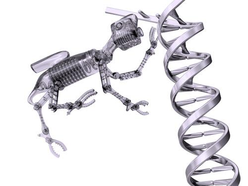 DNA Repair - Advanced