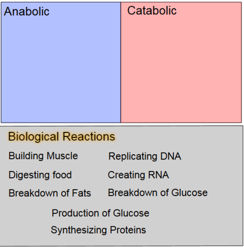 Types of Biochemical Reactions