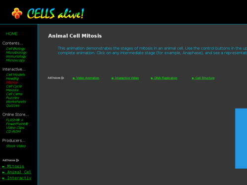 Animal Cell Mitosis