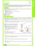 Protists Study Guide