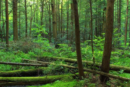 Ecosystems  - thumbnail