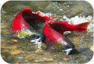 Fish Reproduction - Advanced