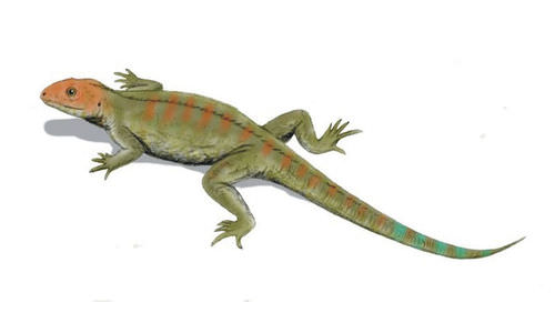 Hylonomus illustration: earliest reptile