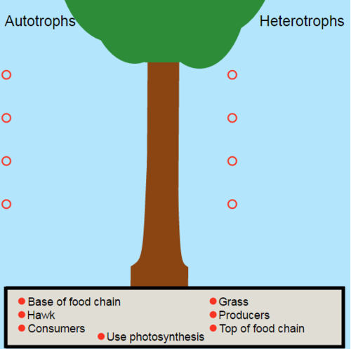 The Trophic Tree