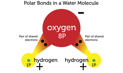 Bond Polarity Ask Answer Learn Table