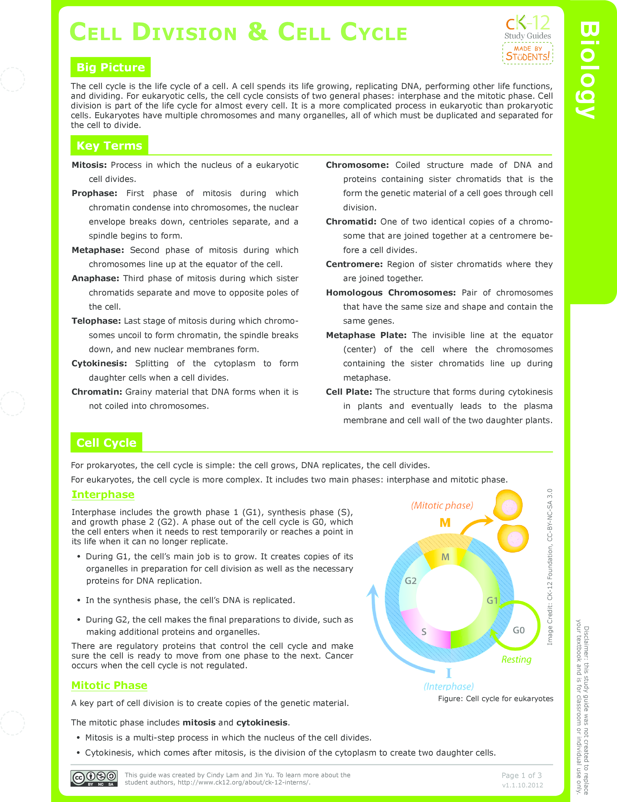 Worksheets Cell Cycle And Mitosis Worksheet Answer Key mitosis ck 12 foundation cell division and cycle study guide