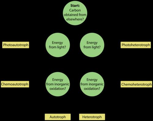 heterotroph vs autotroph venn diagram koni polycode co