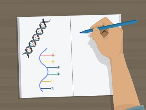 Transcription of DNA to RNA