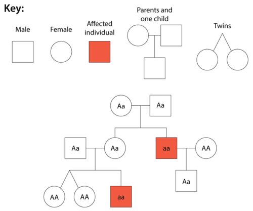 Symbols of a pedigree, and an example pedigree