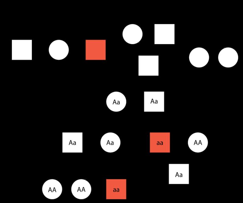 Mendelian Inheritance In Humans Advanced Ck 12 Foundation