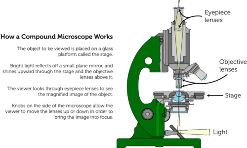 Schematic of a light microscope