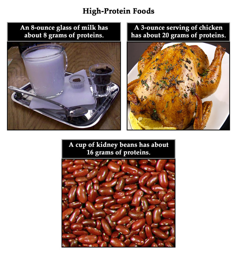 Milk, chicken, beans, seafood, and eggs are good sources of protein