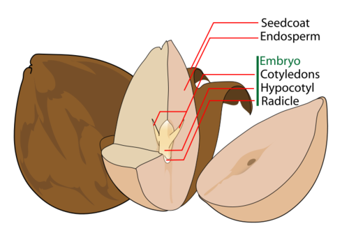 Parts of a seed