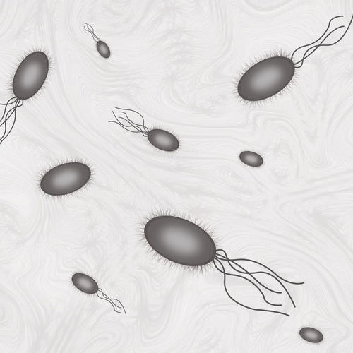 Flagella help bacteria move