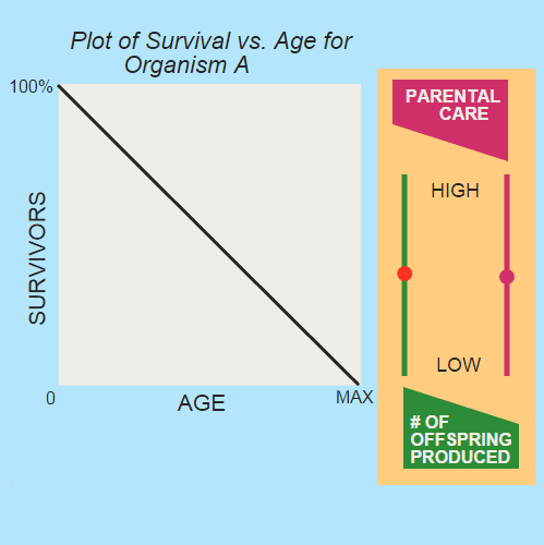 Parental Care and Survival